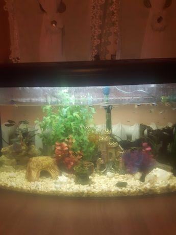 Duże akwarium z wyposażeniem