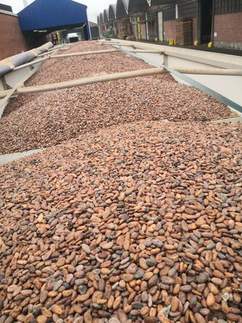 Surowe ziarno kakao 1kg