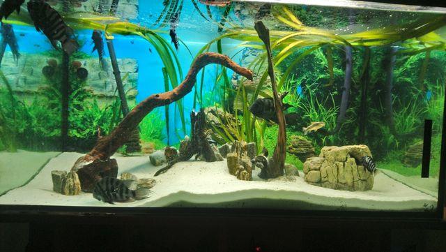 Nurzaniec roslina akwariowa