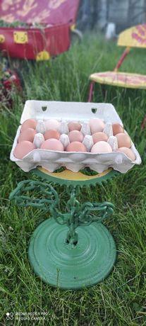 Jajka od kurek z wolnego wybiegu