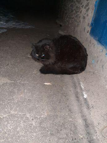 Замечен потерянный кот