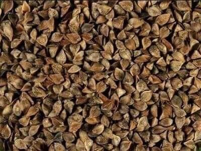 Gryka nasiona młynkowana