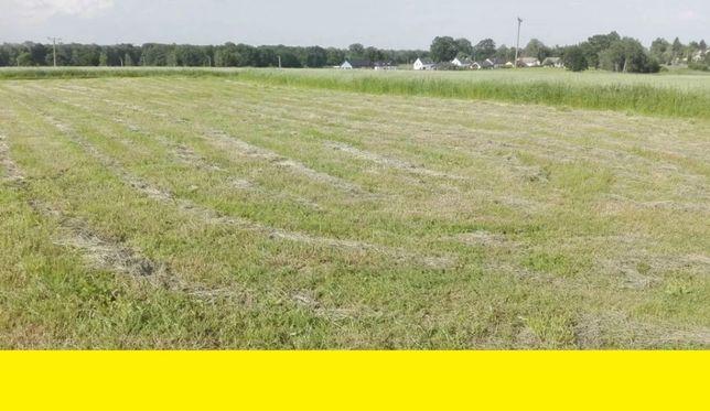 Wynajmę wydzierżawię łąkę powyżej 3 ha w Łowiczu. łąka.