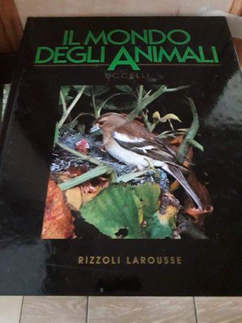 Książki w języku włoskim 13 sztuk