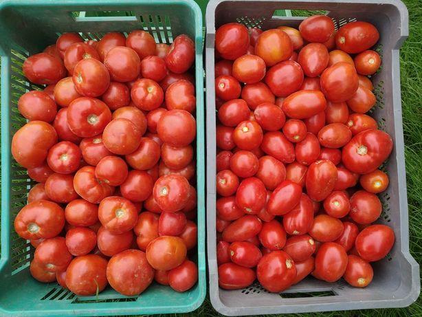 Najsmaczniejsze pomidory gruntowe z Przytocznej
