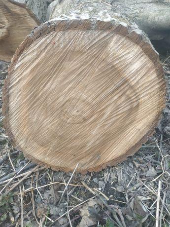 Plastry drzewa drewna orzechowego orzech