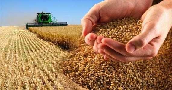 Продам пшеницу, урожай 2021 года