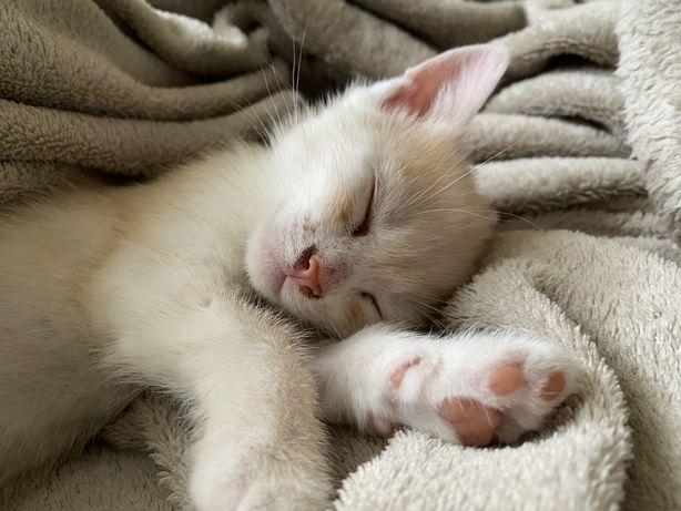 Кошеня котик киця віддам безкоштовно у добрі руки