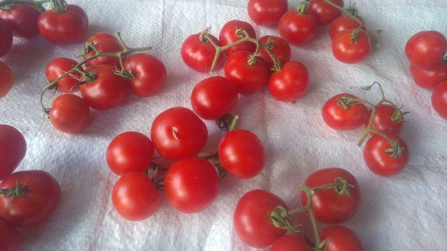 Томат Черри красный (плоды плоскоокруглые) семена