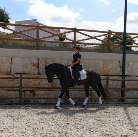 Desbaste de poldros e ensino de cavalos.