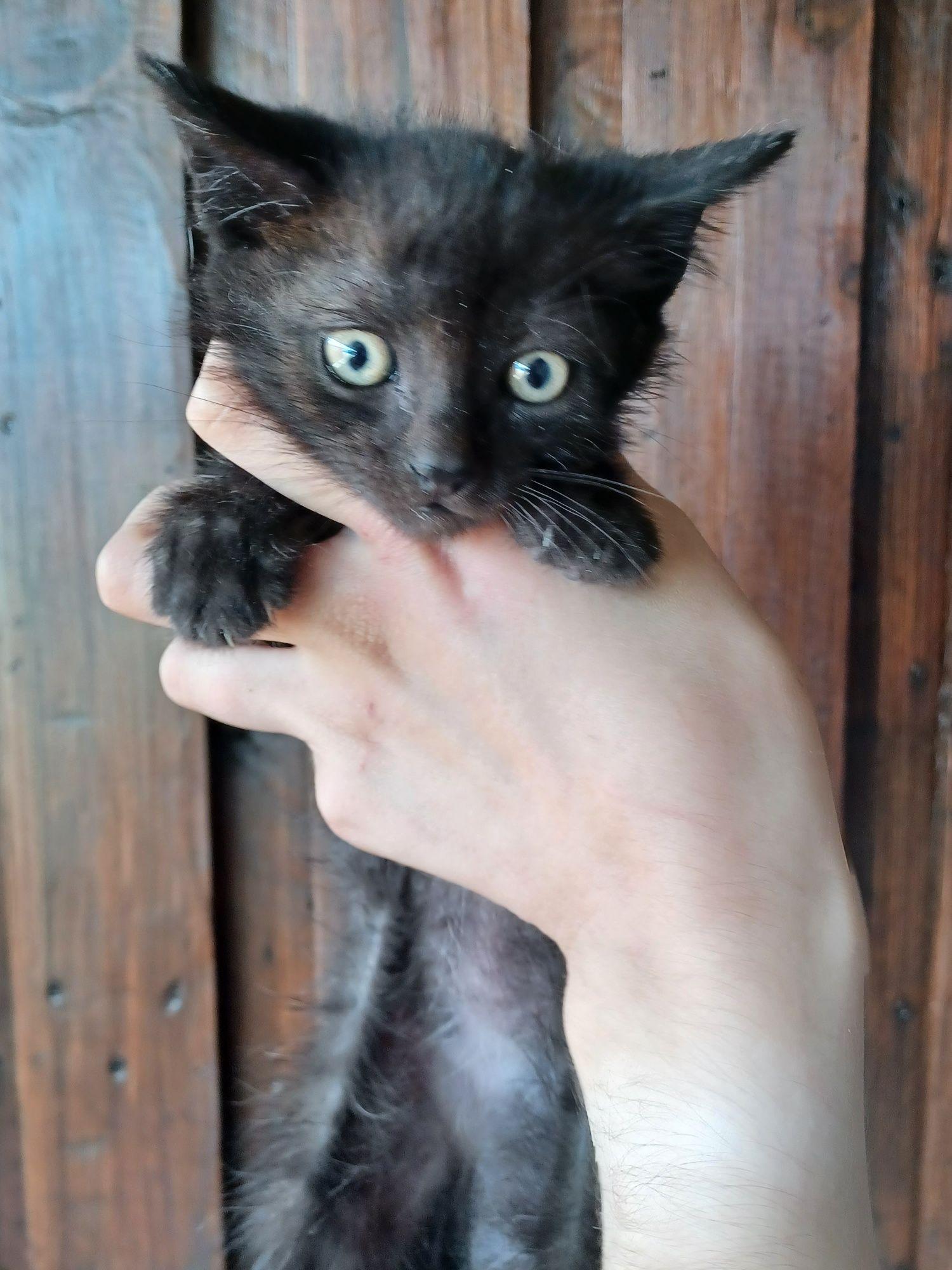 Gatos bebes para adopção