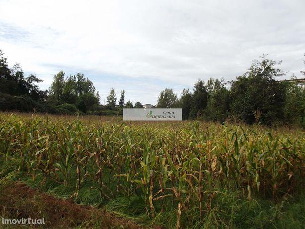 Terreno agrícola, Loureira