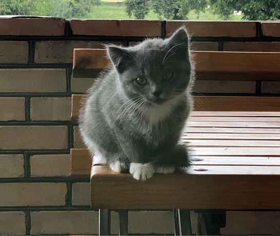 Віддам у турболиві руки породистих кошенят