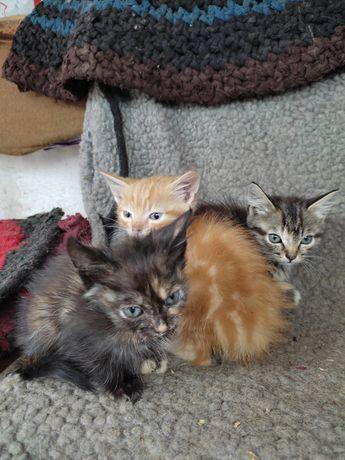Котята, добрые и ласковые