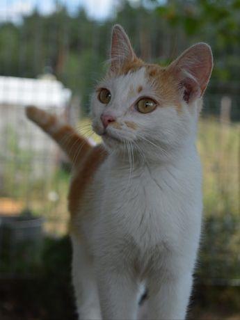 Koteczka Jaśminka do adopcji