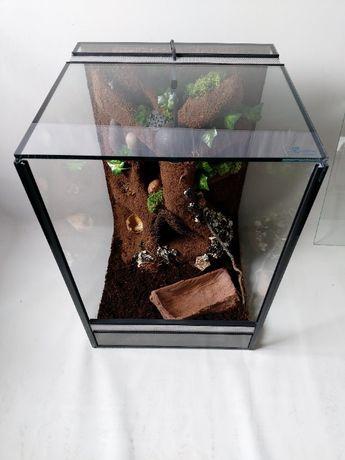 nowe terrarium pionowe z wystrojem pająk gekon orzęsiony wij żaba wąż