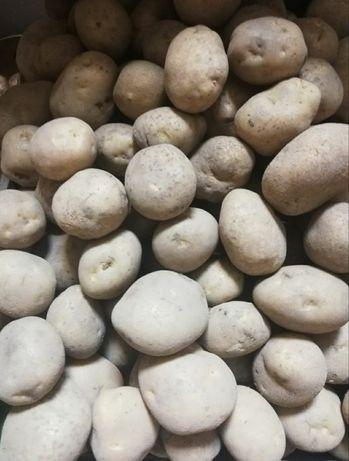 Ziemniaki w worku 15kg hurt