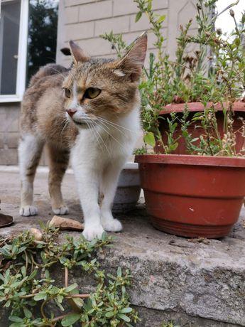 Кошечка * добрая и ласковая*