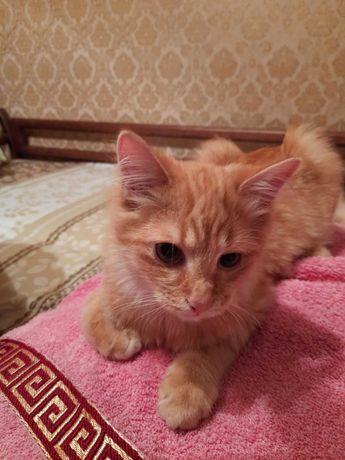 Котенок маленький (рыжий)мальчик