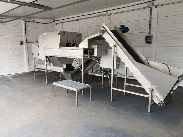 Maszyna do obierania cebuli na biało dwurzędowa
