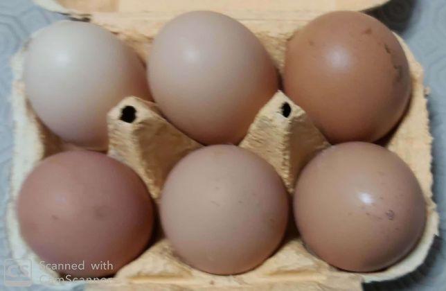 Ovos galados de galinhas e garnizas