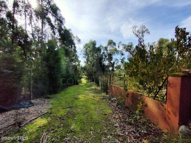 Terreno em Cartaxo com 15.680 m2