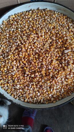 Продам кукурузу домашняя