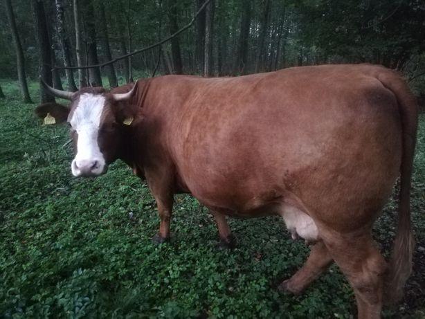 Krowa mamka LM duża sztuka