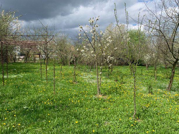 Дачна земельна ділянка в садовому товаристві Ветеран