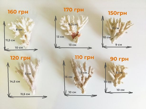 Кораллы для аквариума.