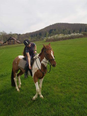 Konie do dzierzawy