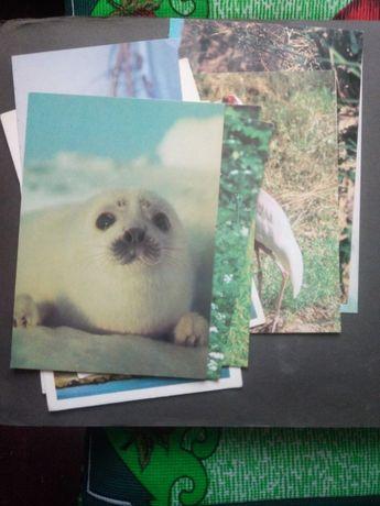 Немецкий фотоальбом с фото животных и птиц, открытки немецкие111