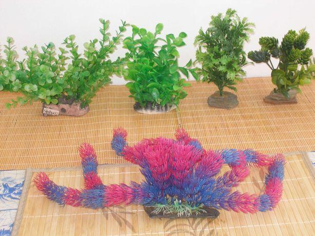 Roślinka rośliny do akwarium