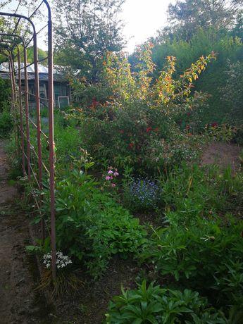 DZIAŁKA rod Kudowa Zdrój ogródek działkowy ogród szklarnia