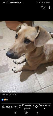 Пропала найдена собака Беленькое - Разумовка