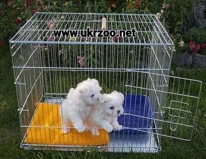 клетка вольер для собаки кота котят щенка кролика животных 63х50х53