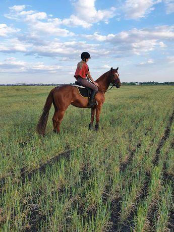 Продам чистокровного коня.лошадь.Кони.пони.