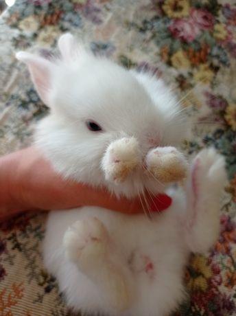 Продам декоративних кроликов