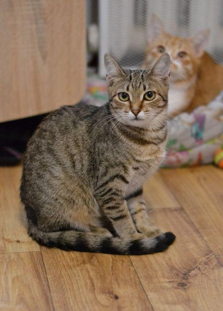 кішечка підліток полосушка 7м