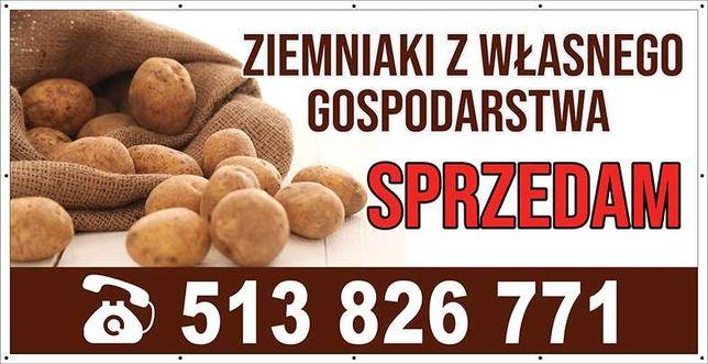 Ziemniaki Irys Irga dowóz od 100kg gratis