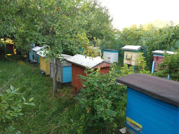 Pszczoły ule rodziny odkłady pszczele. Aktualne !