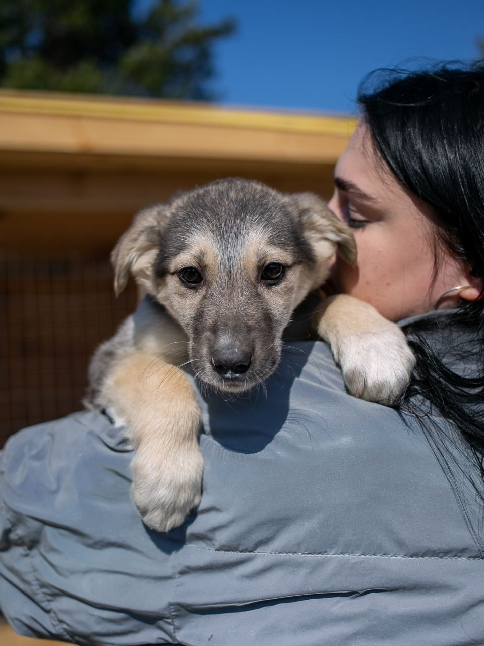 Собачка собака щенок щеня 3 месяца Сальма