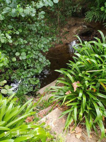 Alugo terreno para cultivo