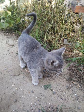 Изумительные котята, котик, котенок, кошечка