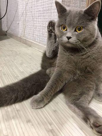 Кот ищет кошку для в'язки