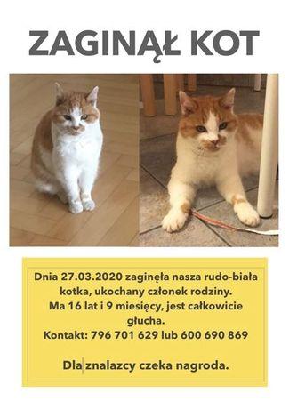 2000zł nagrody zaginęła kotka w Lublewie Gdańskim
