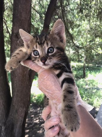 Котятам нужны любящие семьи!