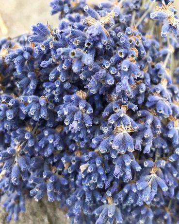 Лаванда, Продам сухоцветы
