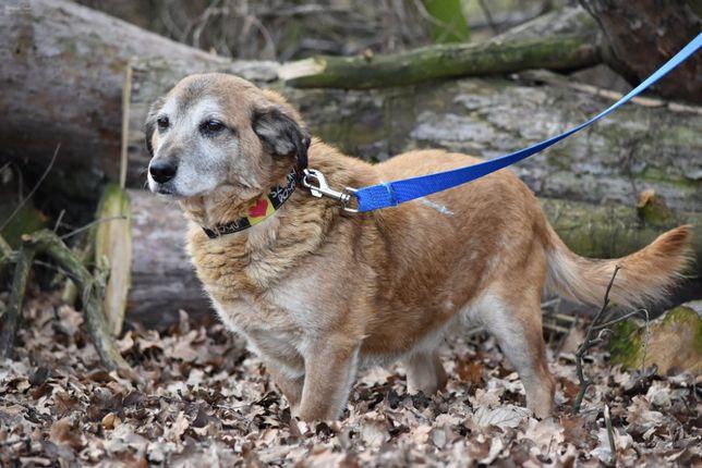 Nivalin - starszy, spokojny psiak; dla rodziny z innymi psami