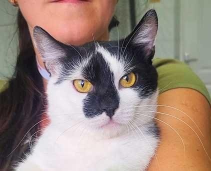 Милашечка Джонатан, добрый и нежный котик, окрас черно-белый, кошка